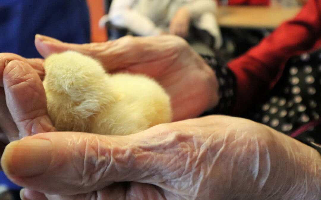 Midwives at Lakeside as baby Chicks are born